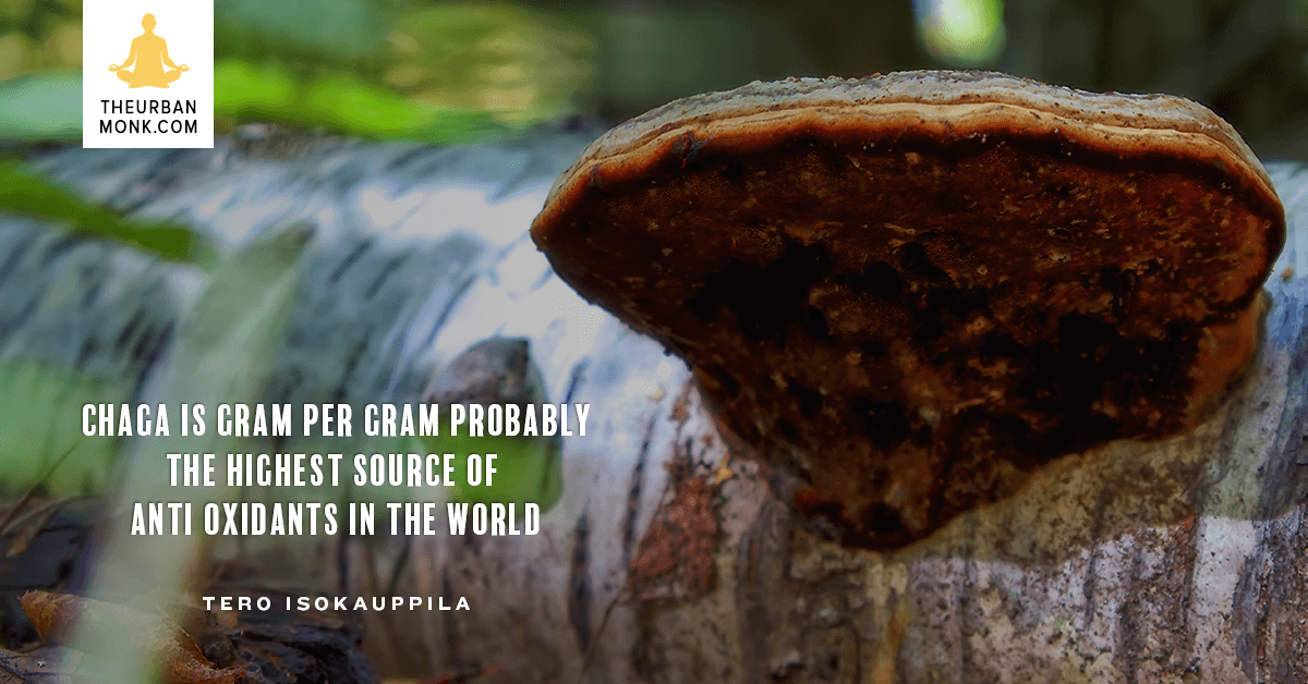 Chaga is The Highest Source Of AntiOxidants In The World - @FourSigmatic via Well_Org