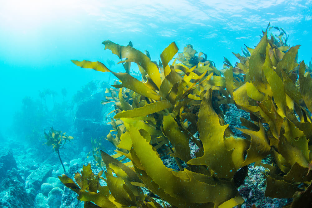 Why You Should Add Seaweed To The Menu