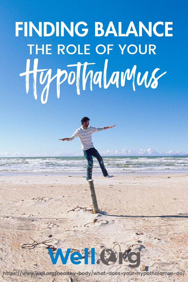 Finding Balance: The Role Of Your Hypothalamus https://www.well.org/healthy-body/what-does-your-hypothalamus-do/