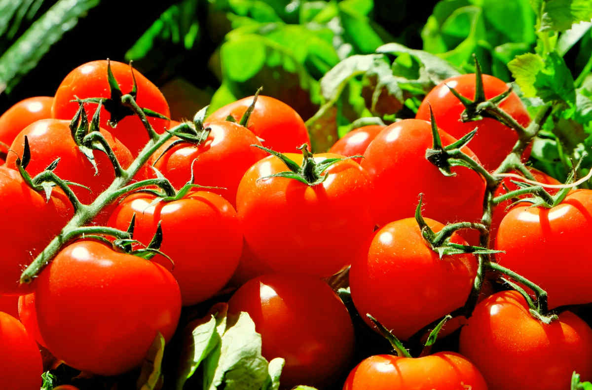 Red Tomatoes | Foods To Exclude From Your Gut Health Diet