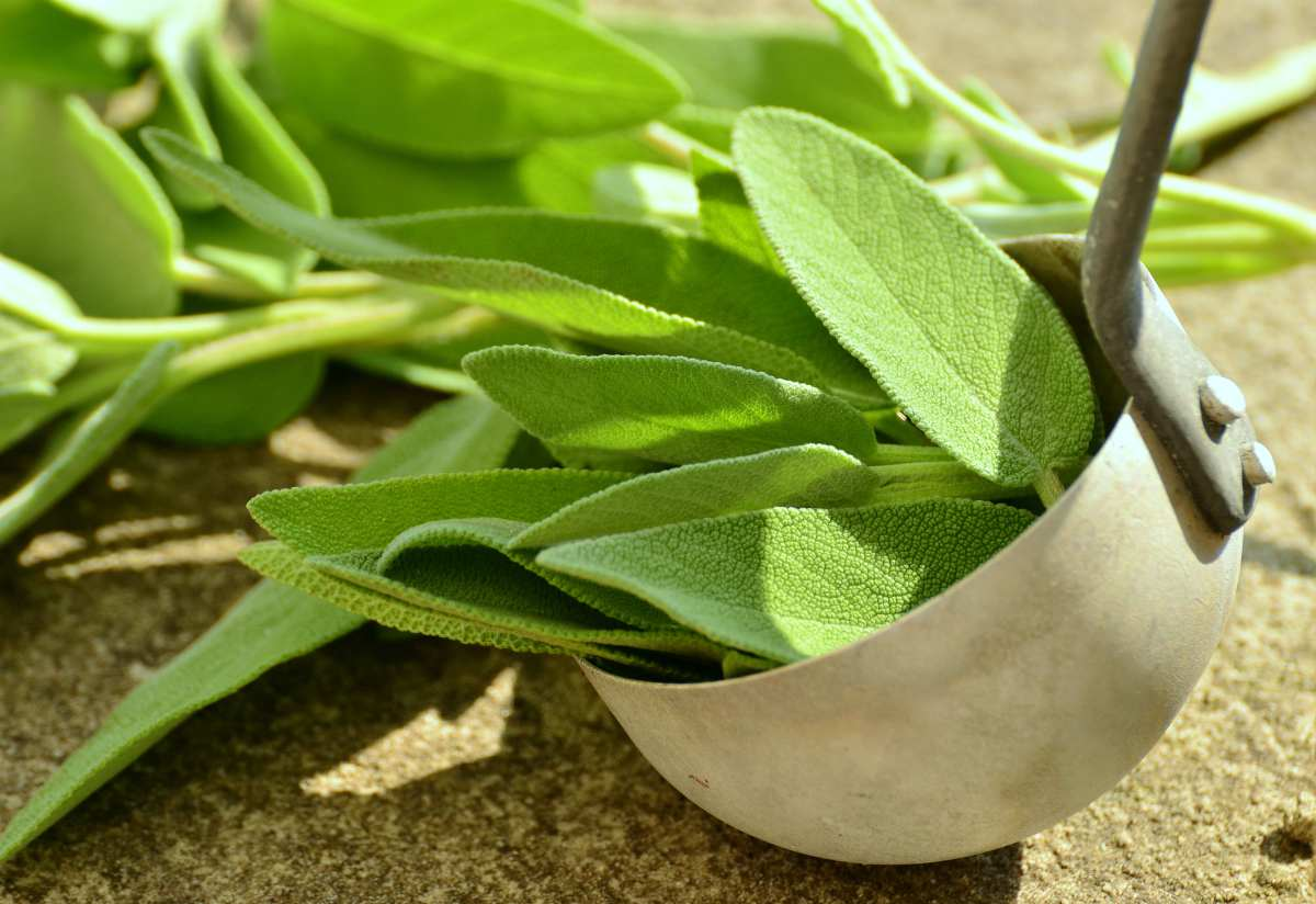 sage herbs | Best Herbs for Energy and Vitality | best herbs for energy