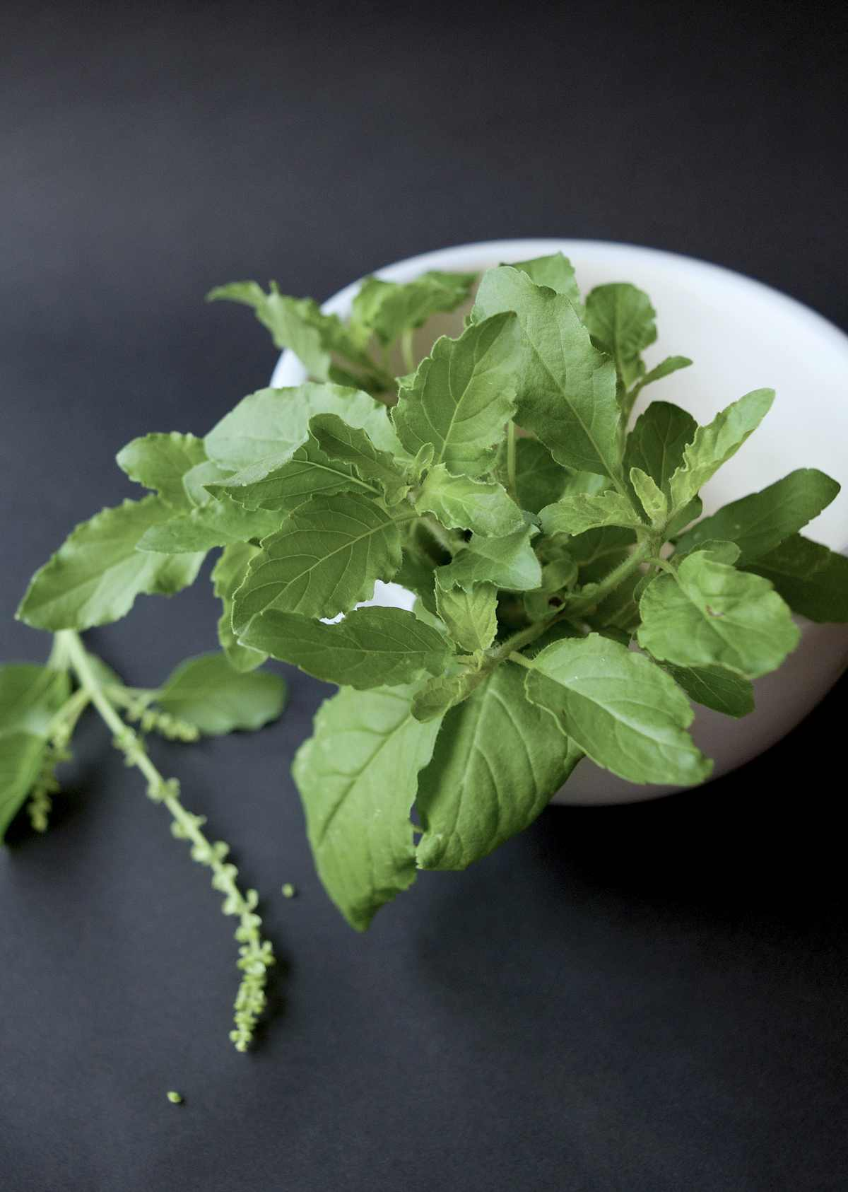 tulsi herbs | Best Herbs For Memory And Concentration | herbs for memory and focus