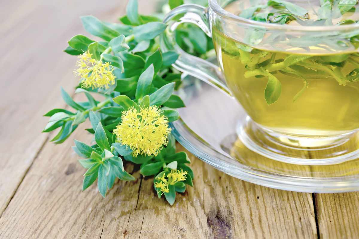 flowers rhodiola tea | Herbs For A Stress Free Life | herbs for anxiety and stress