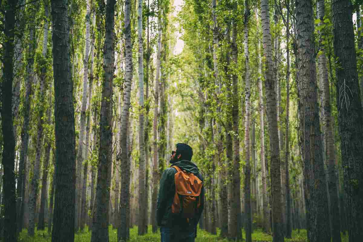 man forest alone | Ways To Go Outside And Relax In Nature This Summer | outdoors