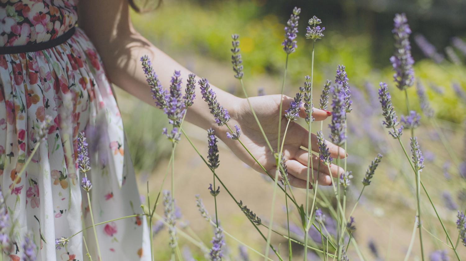 Featured | woman lavender field | Herbs For A Stress-Free Life | herbs for stress and anxiety