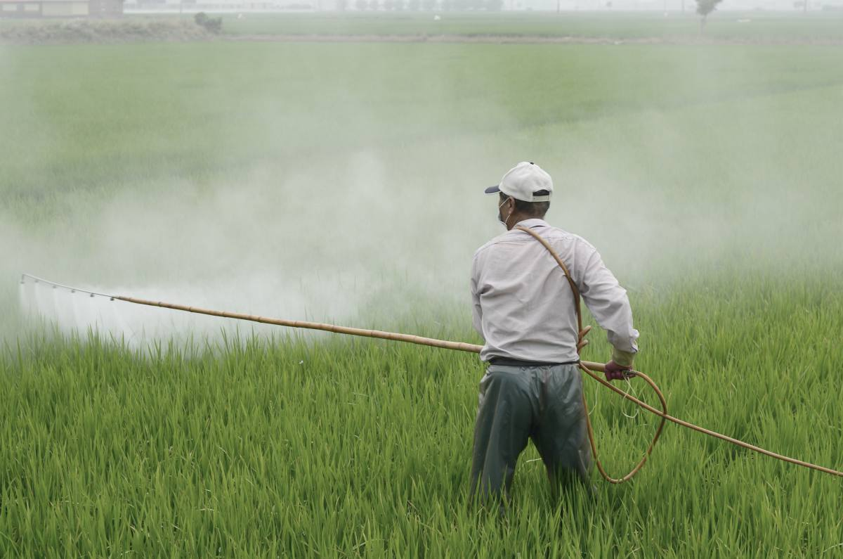man using pesticide on plants   farmer spraying his plants on a rice field   natural environment   toxins in our environment